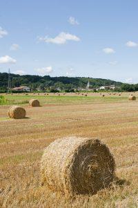 AGRICULTURE_CAPI